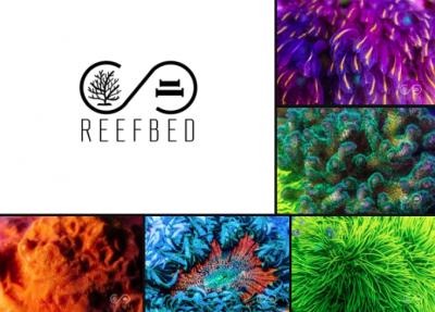 Reef Bed.png