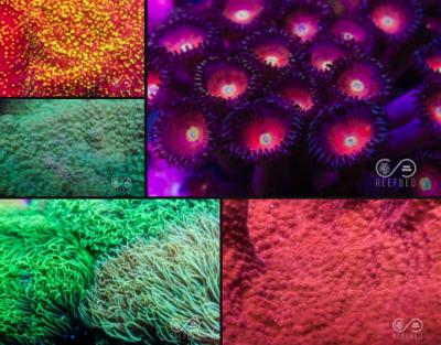 Reef Bed 2.png