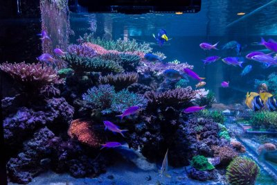 R2R Reef of the Month: Joe's 270-gallon SPS Reef - March 2018