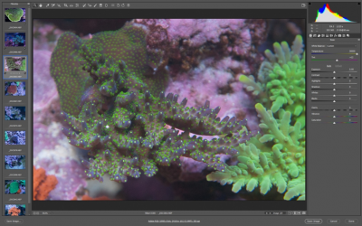 Your Guide to Aquarium Photography #7 - Post-processing