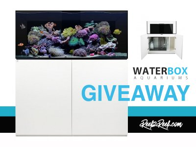 The WATERBOX PLATINUM Giveaway! It's Bling Bling!