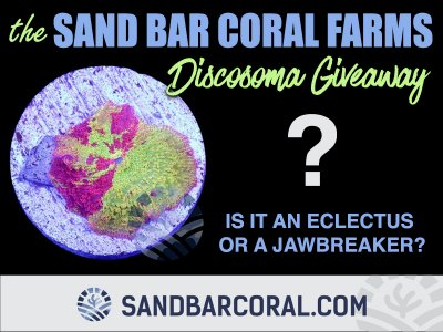 Is this an Eclectus or Jawbreaker? The Sand Bar Coral Farms Discoma Giveaway!