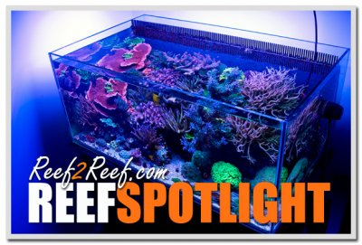 """Reef Spotlight - April 2013 - """"PmRg"""""""