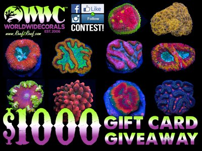 The World Wide Corals $1000 Gift Card Giveaway! Enter today for your chance to WIN!