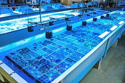 Feed like a geek...Your reef will LOVE you for it!