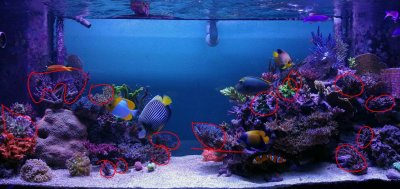Mariculture vs Aquaculture Frags: How to Have Success with Maris!