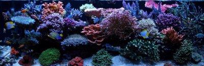 """Reef Spotlight - December 2010 - """"ReefBum"""""""