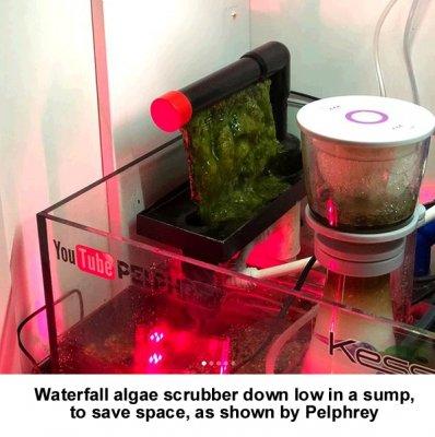 Algal Filtration In Reef Aquariums