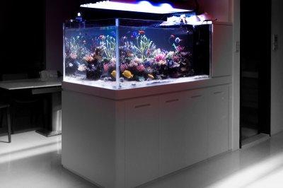 Smart Aquarium is Coming