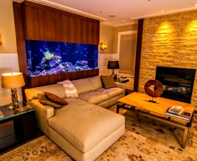 Equipment : Choosing Your Display Aquarium