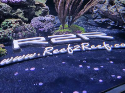 R2R Reef of the Month: Elder1945 - An Innovative Reefer's Spotlight - July 2018