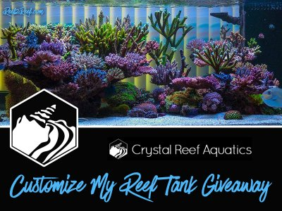 "The CRYSTAL REEF AQUATICS ""CUSTOMIZE MY REEF TANK"" Giveaway!"