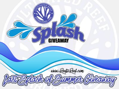 **** LAST SPLASH OF SUMMER GIVEAWAY by CULTIVATED REEF ****