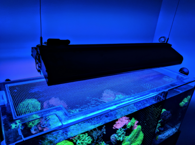 Equipment: Aquarium Tops Are a Necessity
