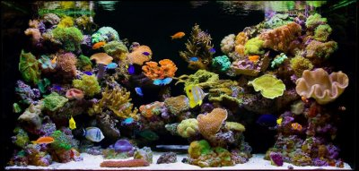 """How to tell if your aquarium sucks (""""What did you just say, Fellman?"""")"""
