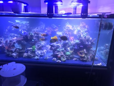 Planning and Transitioning to 500 Gallons