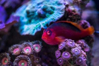 Keeping Your Marine Fish Healthy Part 1: Separation and Sterilization