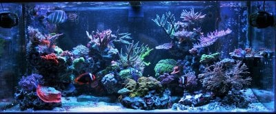 Keeping Your Marine Fish Healthy Part 2: The Reef Aquarium Medicine Cabinet