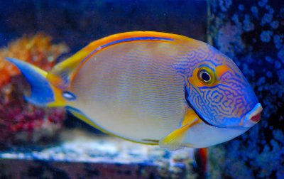 10 Do's and Don'ts for the Beginner Reef Aquarist