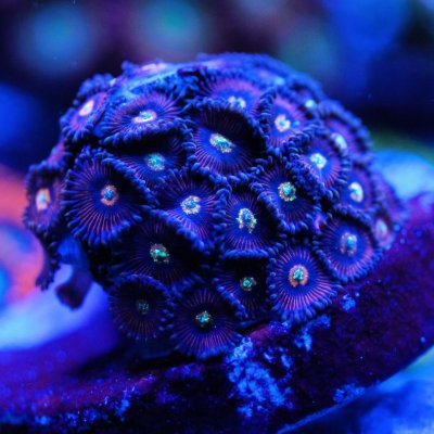 Taking the Plunge: Starting Your First Reef Aquarium