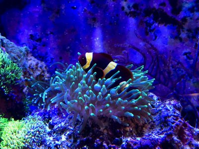 Profile of a Reef Aquarist (1)