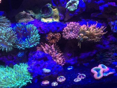 Reef2Reef FAQ #1: Substrates