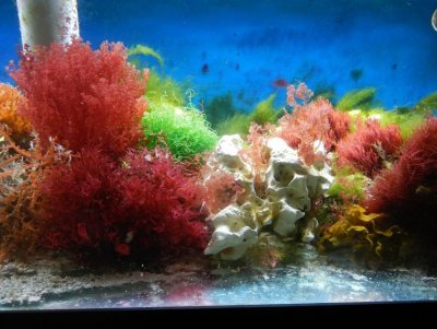 Cycling a Brand New Reef Aquarium