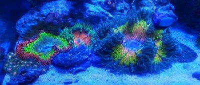 Profile of a Reef Aquarist (#2)
