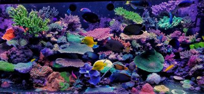 Reef2Reef FAQ #2 Freshwater Versus Saltwater