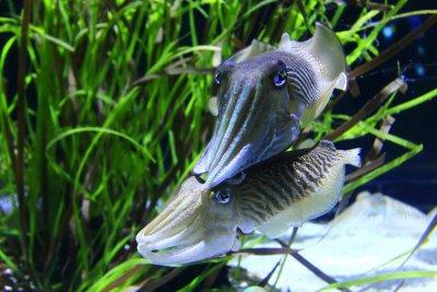 A Tour of the Class, Cephalopoda
