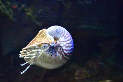 nautilus-1633615.jpg