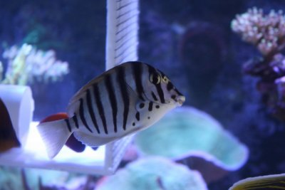 Profile of a Reef Aquarist (#3)