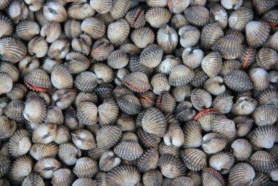 Shellfish Poisoning Syndromes Part 1
