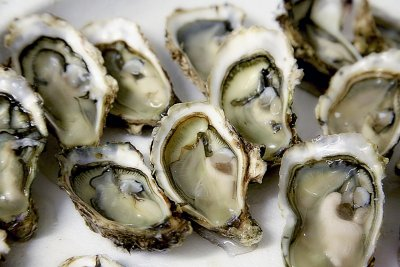 oyster-1522835_1920.jpg