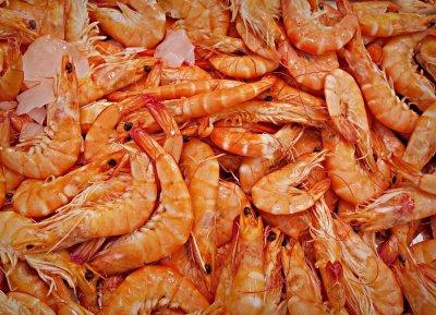 shrimp-1523135_1920.jpg