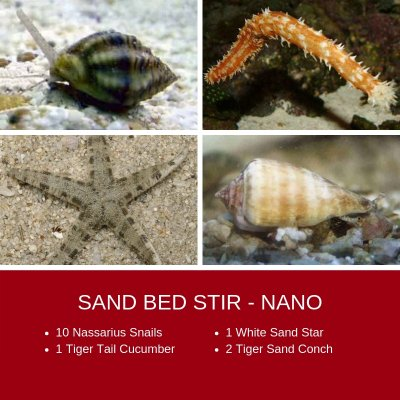 SAND BED STIR - NANO (1).jpg