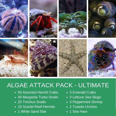 ALGAE ATTACK.jpg