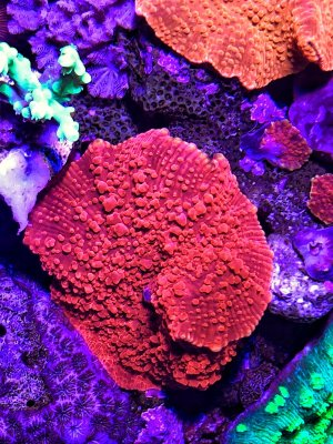 A Soft Start to Corals