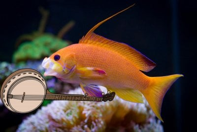 Fish and Music