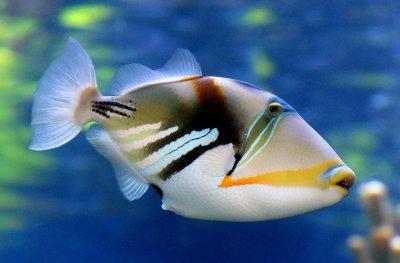 Kenya's Ornamental Marine Fish Trade