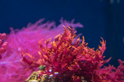 Profile of a Reef Aquarist (#4)