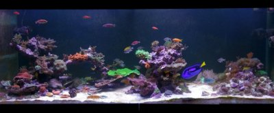 Introduction to Flow, Tank Turnover, and Powerheads for the Reef Tank, Part 2