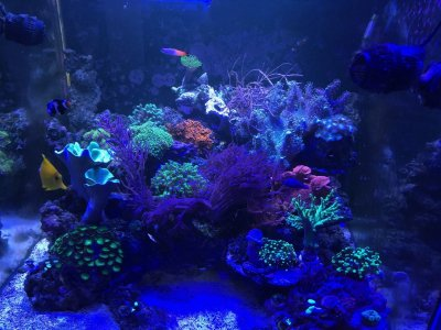 Introduction to Flow, Tank Turnover, and Powerheads for the Reef Tank, Part 3