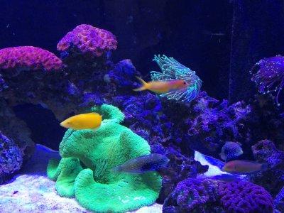 Profile of a Reef Aquarist (#5)