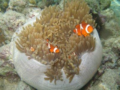 Book Review--The Marine Aquarium Handbook: Beginner to Breeder by Martin A. Moe, Jr.