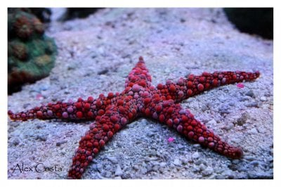Why Starfish or Sea Stars Are Cool