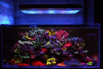Reef of the Month, April 2019, @alexandrfeist