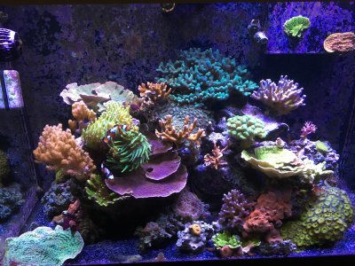 A Photo Essay: 15 Before and After Full Tank Shots for Inspiration
