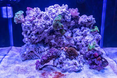 Profile of a Reef Aquarist (#6)