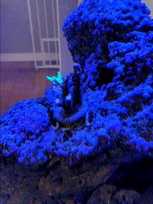 garf.bonsai-after.jpg